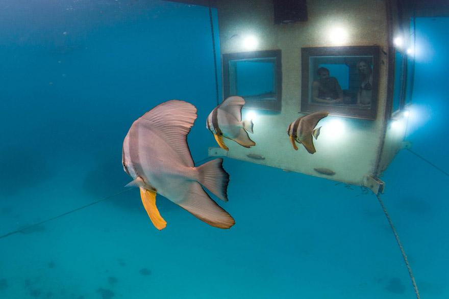Un hotel flotante en Zanzibar que te permite dormir junto a los peces 3