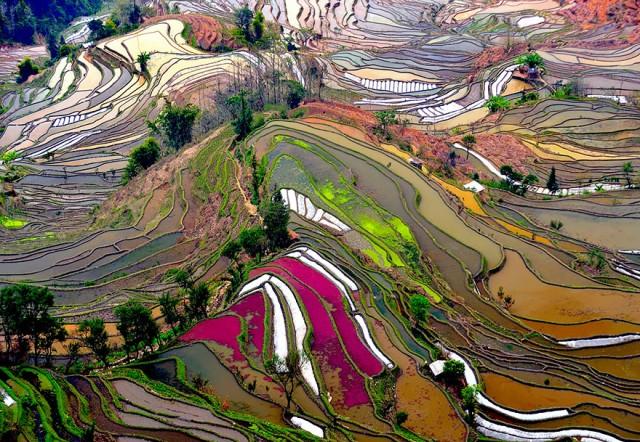 campos colgantes arroz china