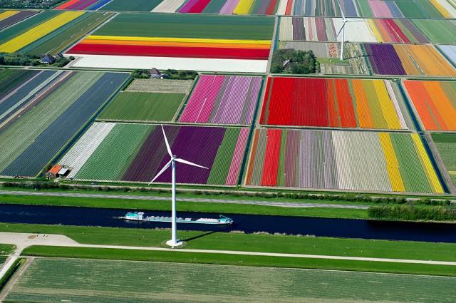 campos de tulipanes holanda