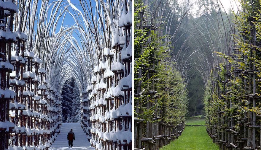 La Cattedrale Vegetale una catedral hecha con ramas y vegetacion 3