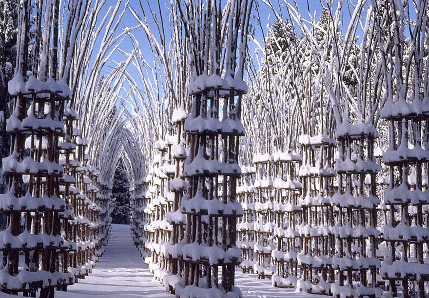 La Cattedrale Vegetale una catedral hecha con ramas y vegetacion 8