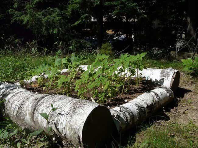 arboles caidos reciclados 11
