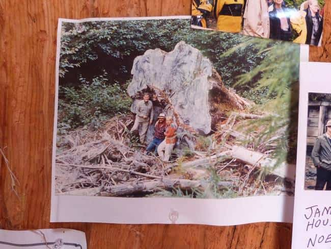 casa tronco madera 3