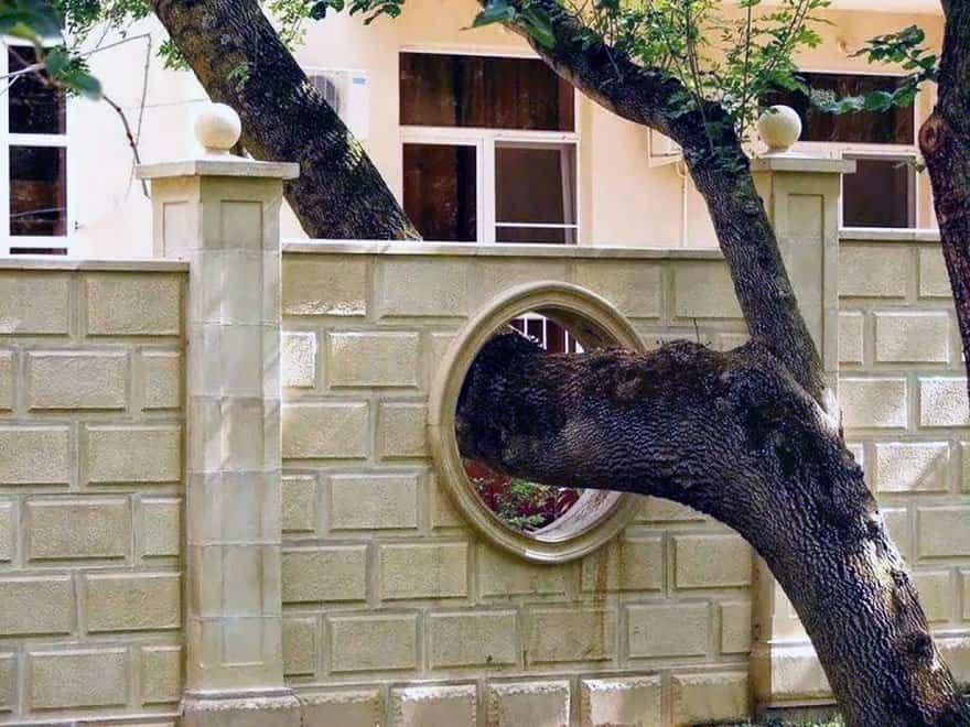arboles parte de la estructura del edificio 6