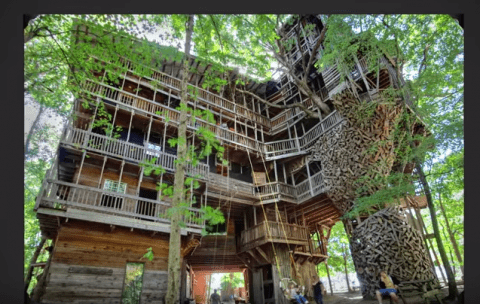 Casa del árbol sobre un roble de 25 metros