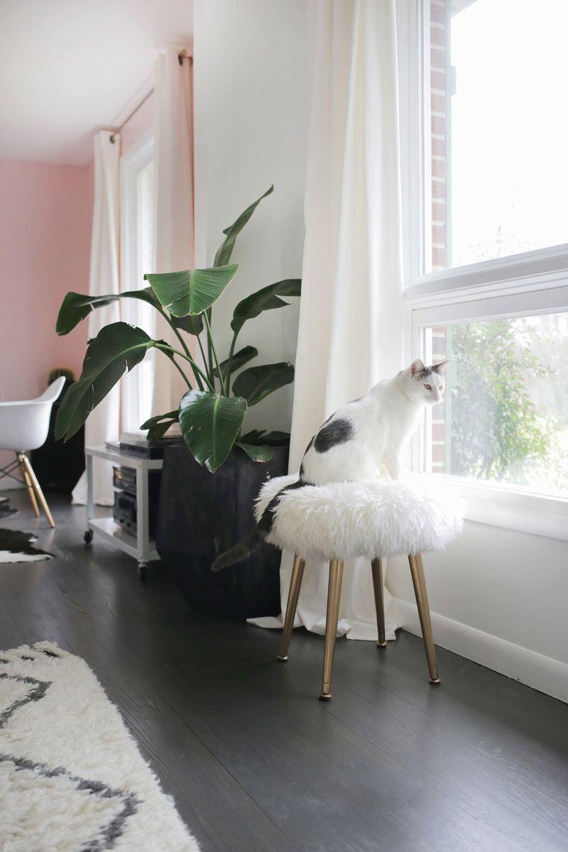 ser creativos en el hogar 10 - inspiración animal