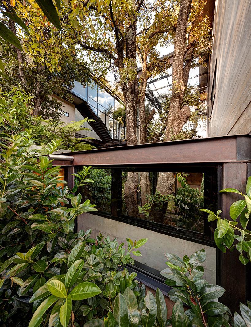 casa bosque en méxico 13