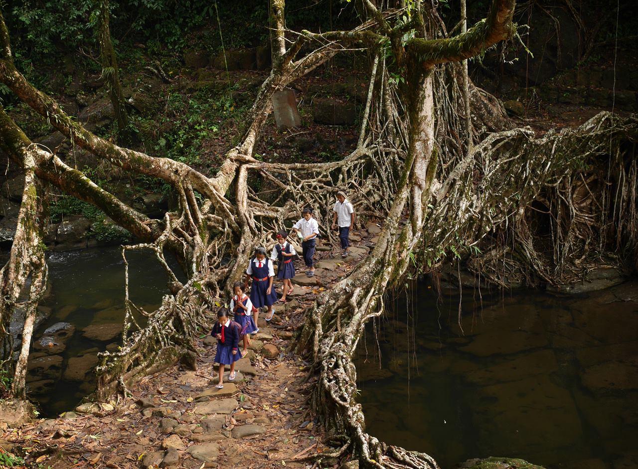 puentes más curiosos del mundo 11 - puente vivo