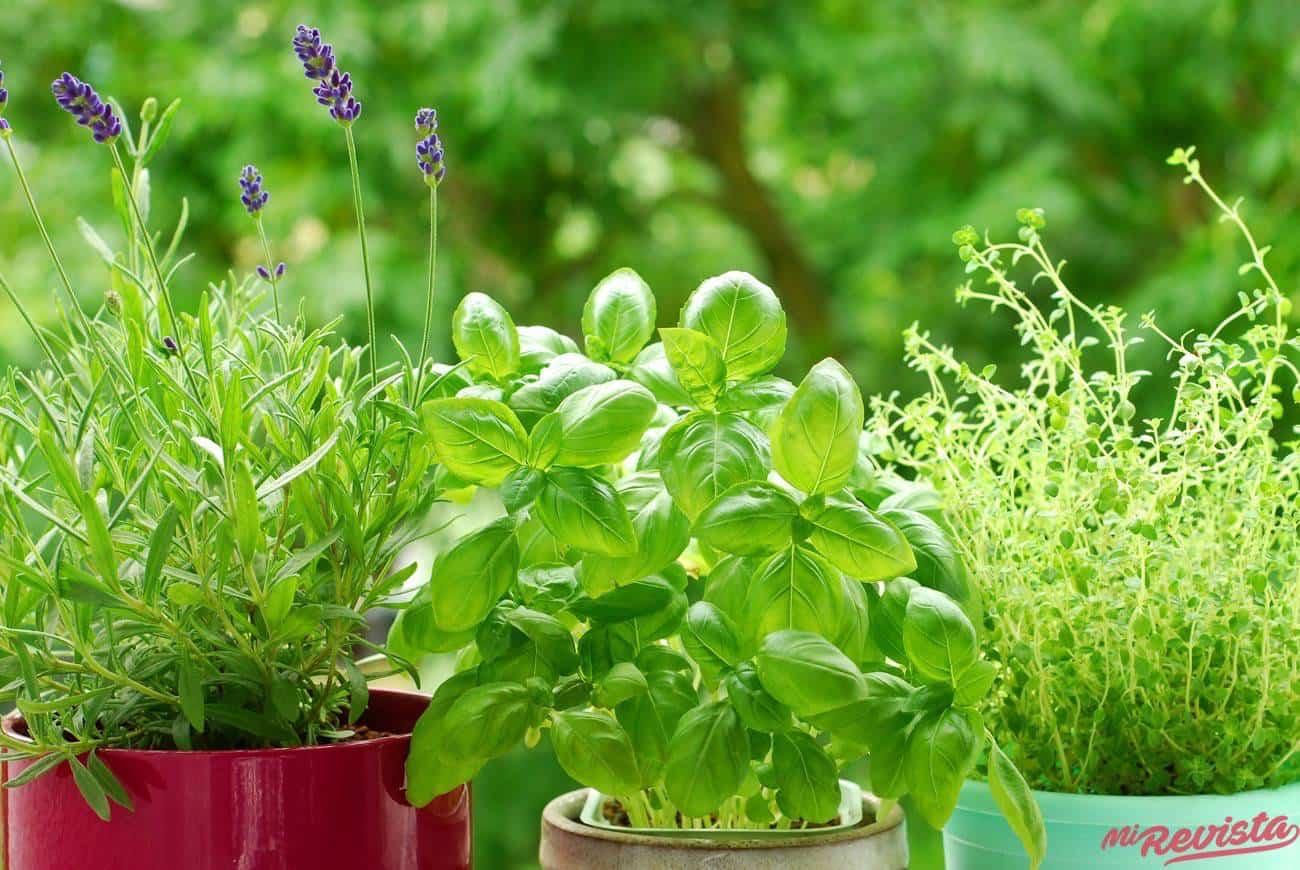 albahaca y otras hierbas