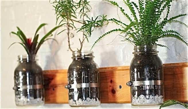 tarros de cristal plantas