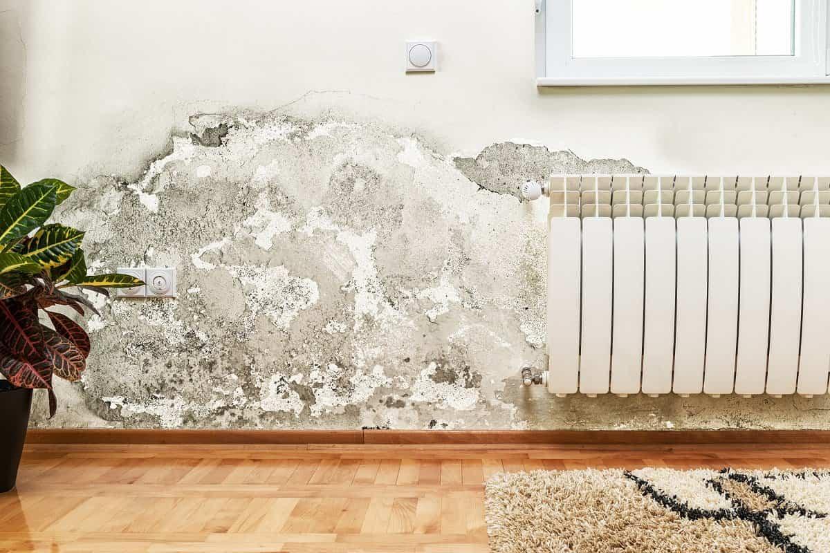 Consejos para eliminar las humedades por capilaridad
